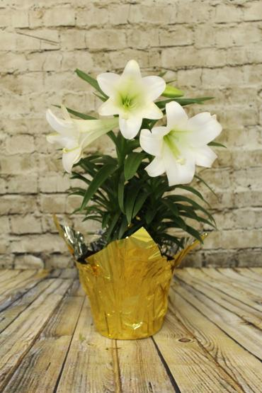 Easter Lily - 2 plants